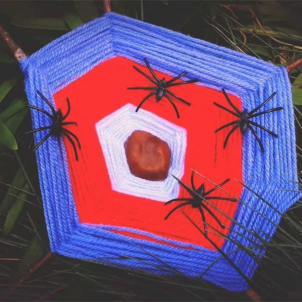Little Explorers: Woolly Webs
